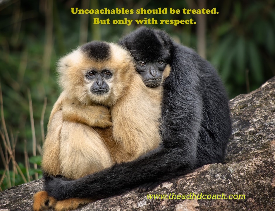 uncoachable-apes-copy